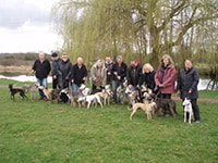 Whippet club